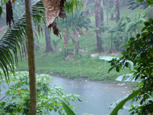 A rainy day in the Solomon Islands
